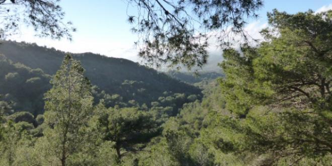 Plantación del Bosque de Terapeutas Familiares